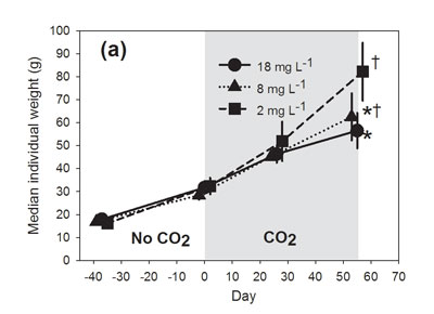 Individual weight gain was lower for fish held at higher CO2