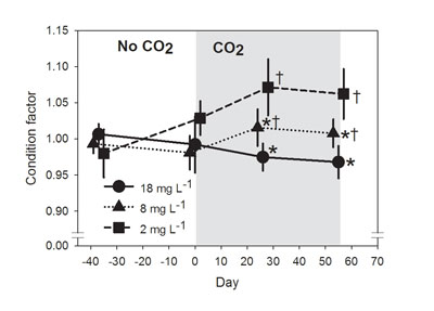 Condition factor ('fatness') was lower for fish held at higher CO2