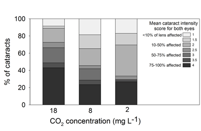 The effect of CO2 level on cataract intensity of juvenile Atlantic cod.