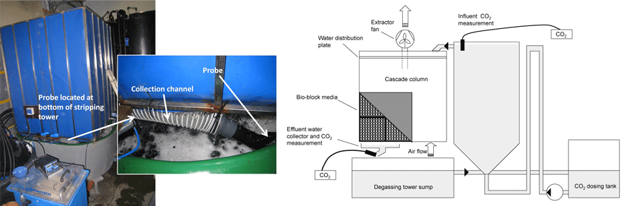 In a cascade column the water falls down over a large surface area and CO2 diffuses from the water into the lower-CO2 air. I measured the CO2 removal efficiency of this column in fresh and saline water.