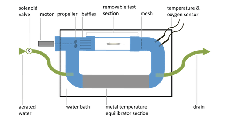 A schematic of the 1.6L swim flume respirometer used to measure oxygen consumption over 7 days.