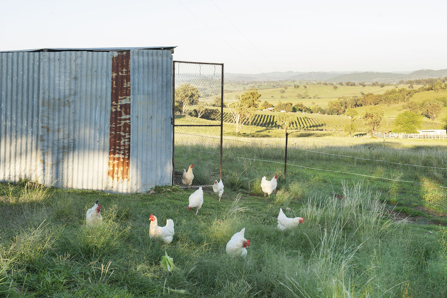 Rosby Guesthouse Chooks