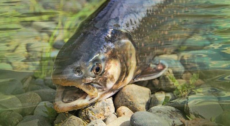 trout_fishing.jpg