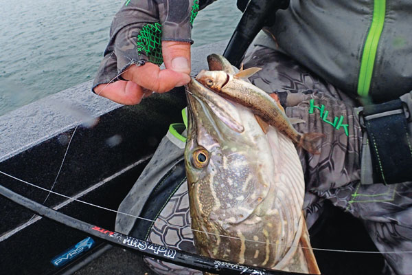 late_summer_pike_fishing.jpg