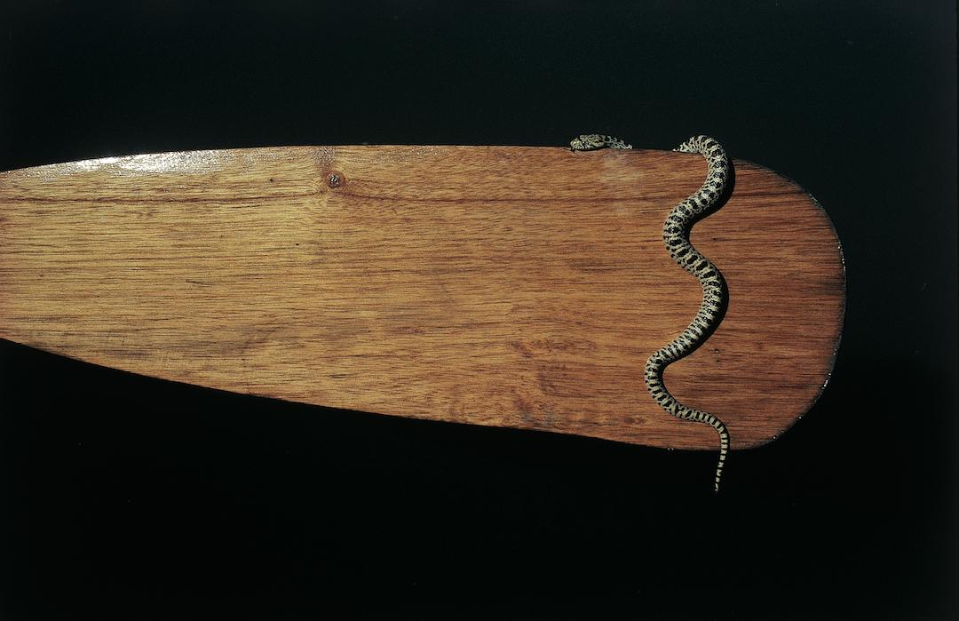 121.SnakePrime.jpg