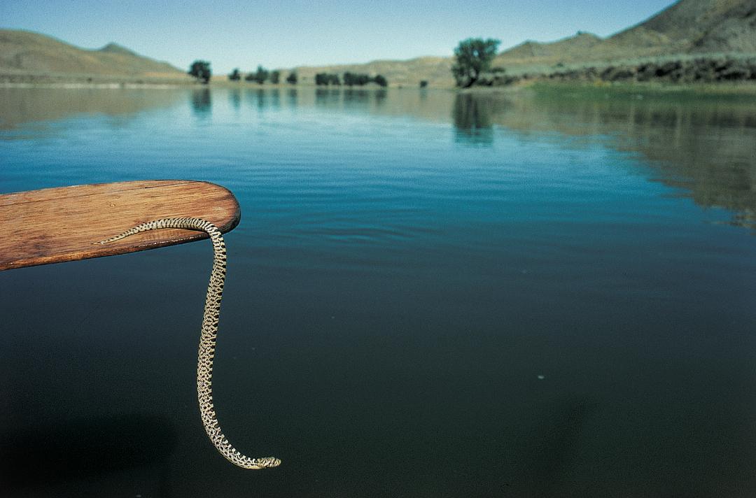 120.Snake.jpg