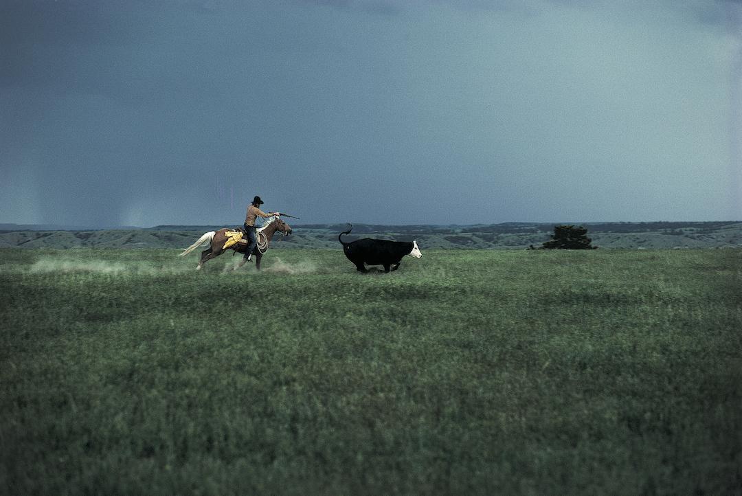 135.CowShootingPrime.jpg