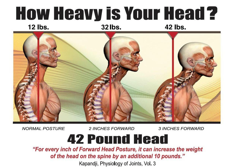 Slide 4 -- How Heavy is your Head.jpg