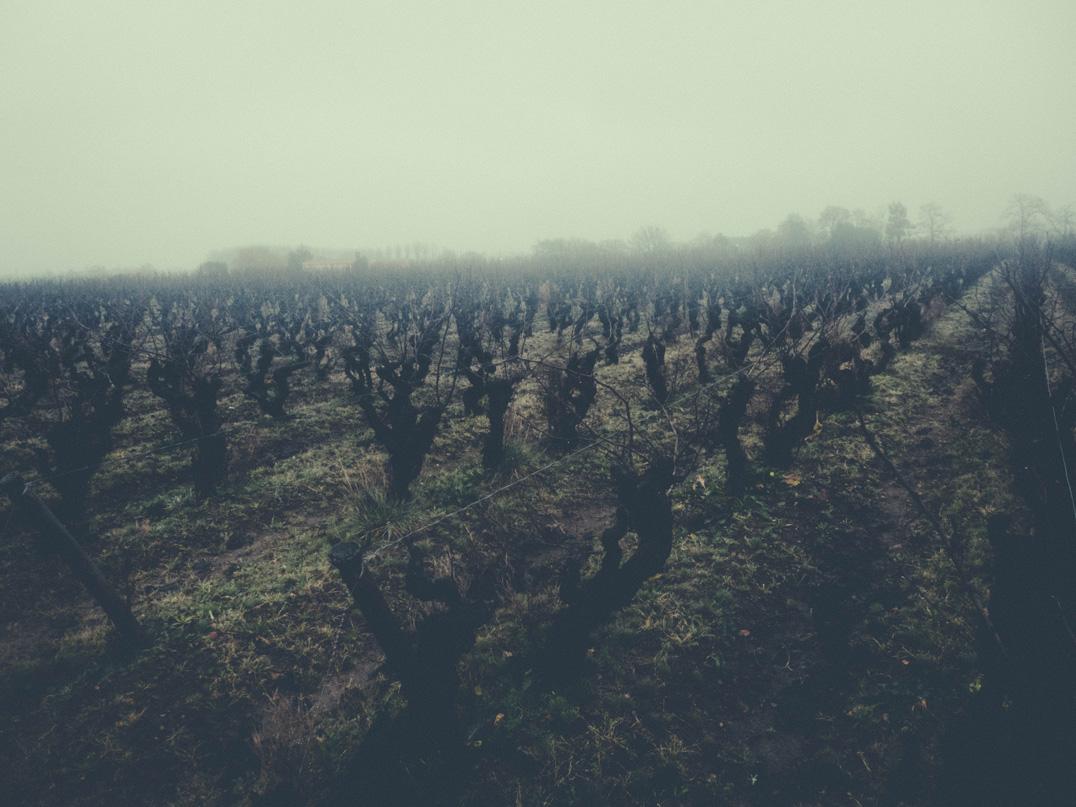 Vineyards at Luneau-Papin