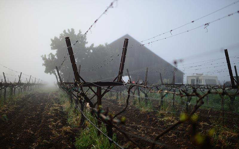 Matthiasson's home vineyard