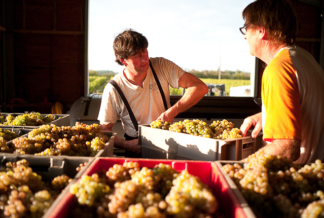 tessier-grapes-selection