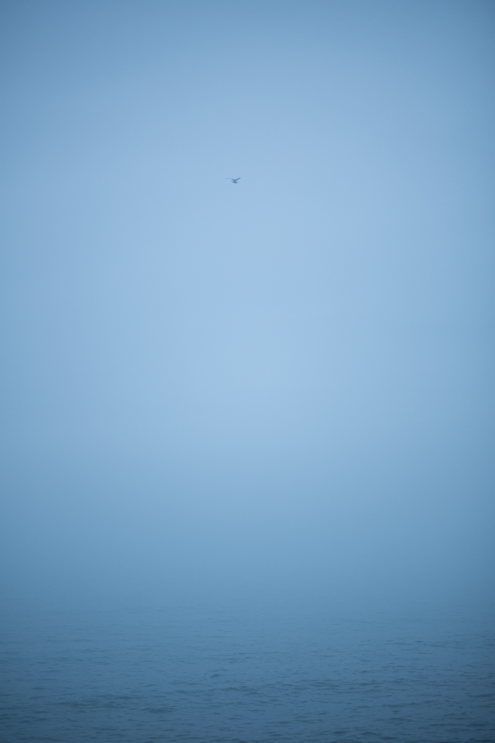 A seagull soars out into the mist.