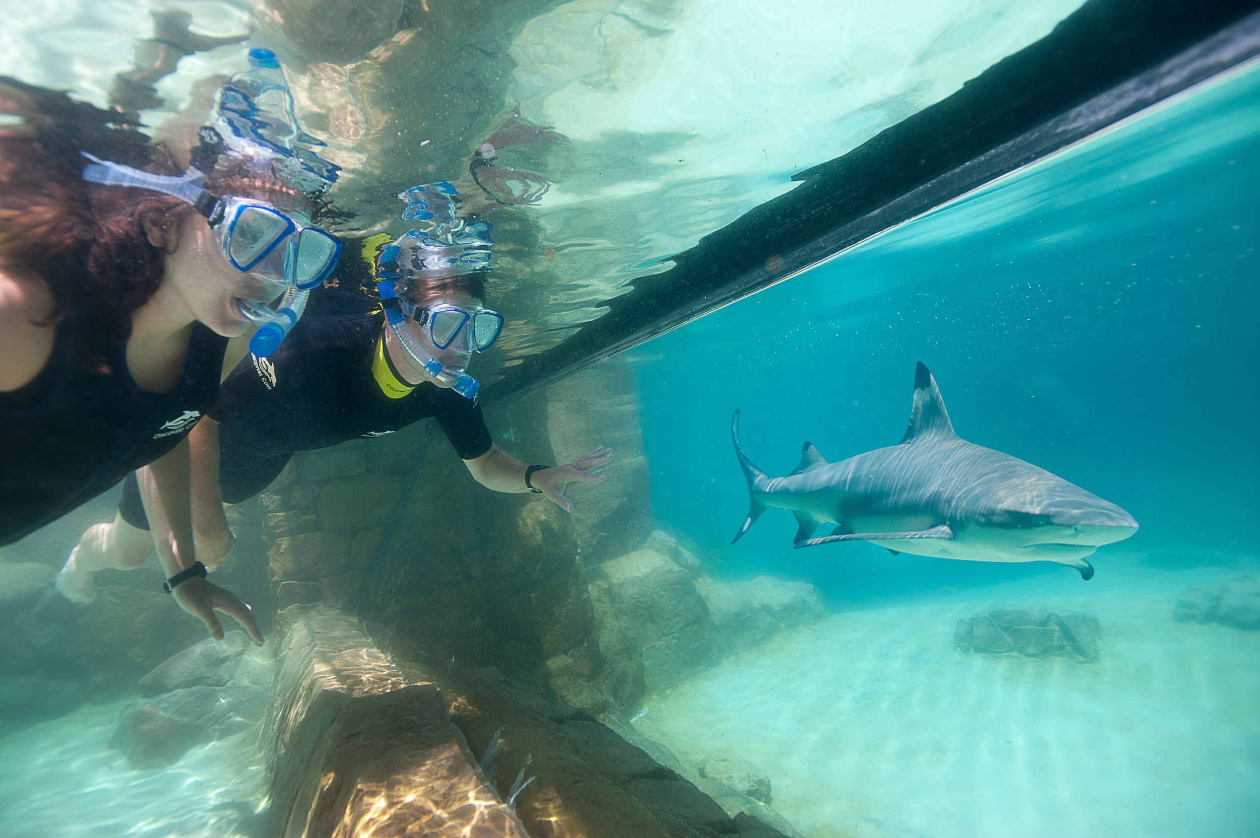 Discovery Cove High Res 1.jpg