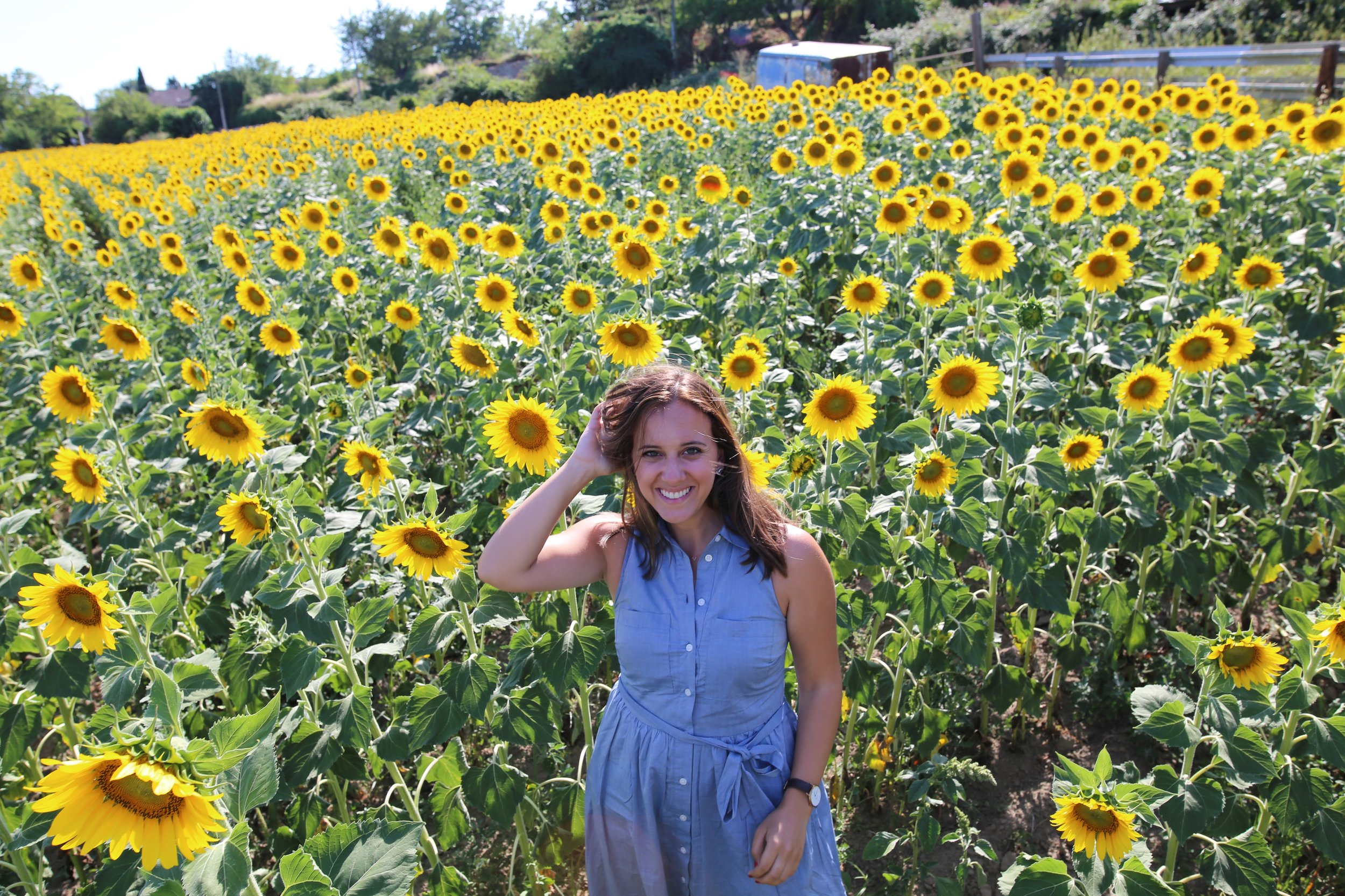 In the sunflower seeds in Provence
