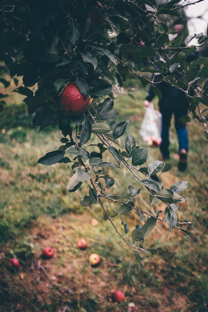 Going on new adventures. This photo is from apple picking in Michigan!