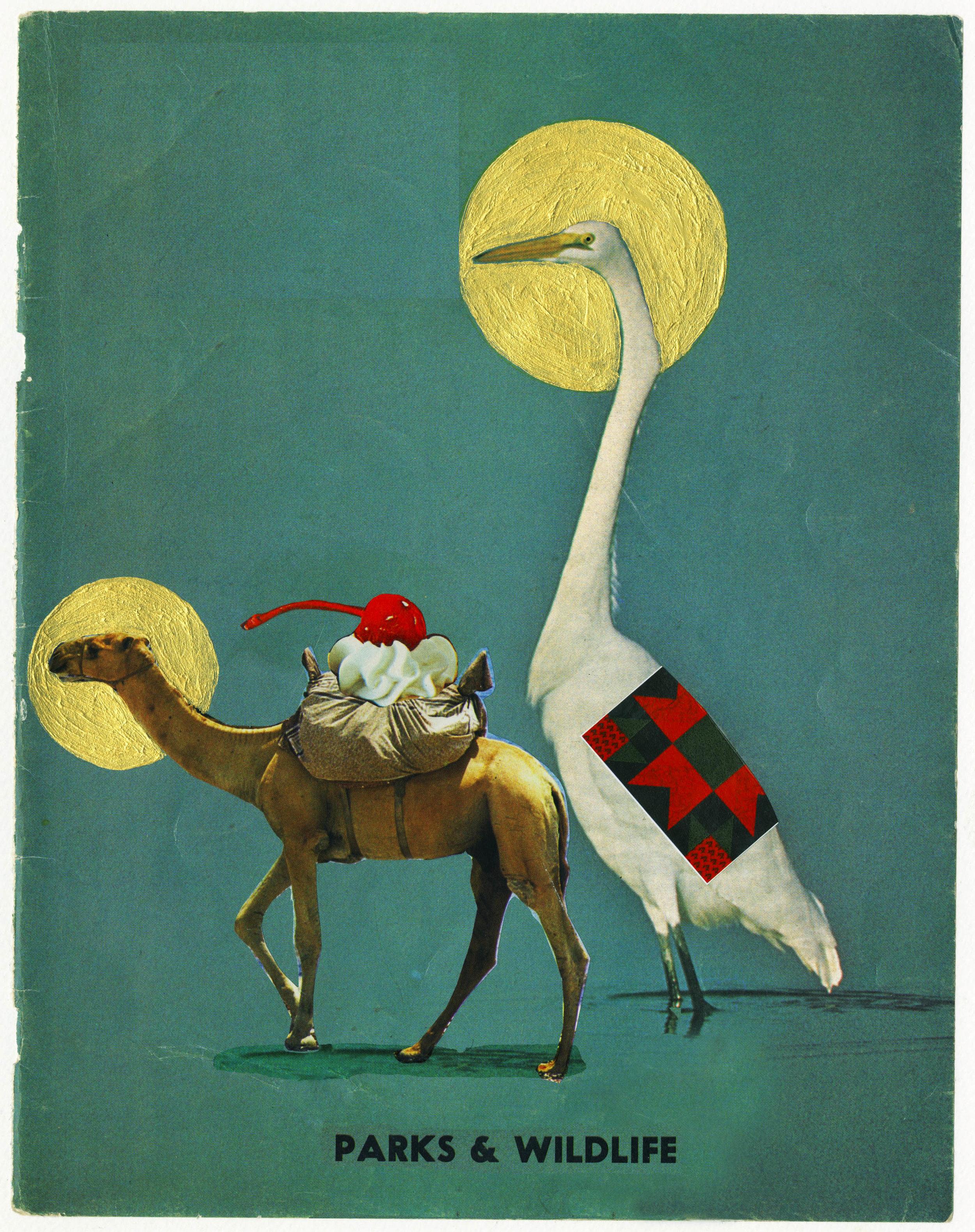 Crane and Llama.jpg