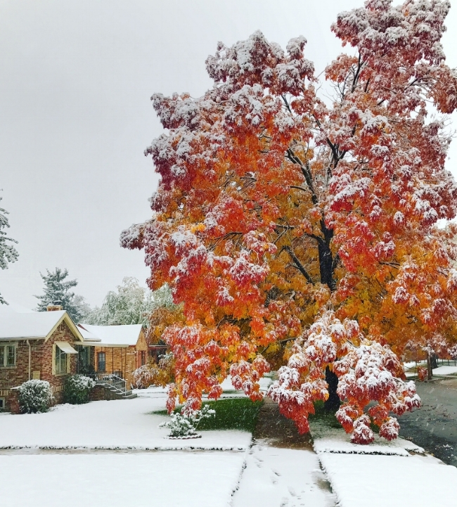 The snow didn't stop us from leaf peeping on Monday!