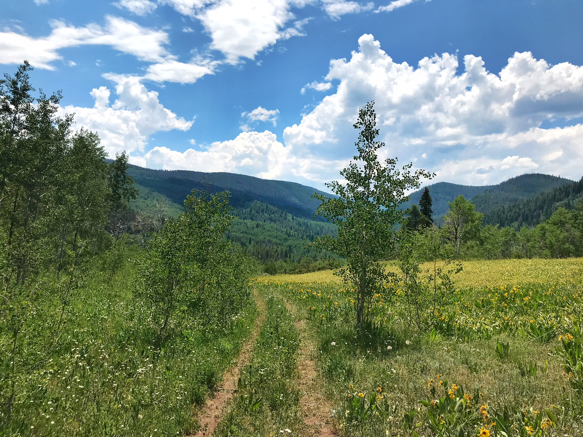 A summery snapshot from a hike up in Edwards, CO.