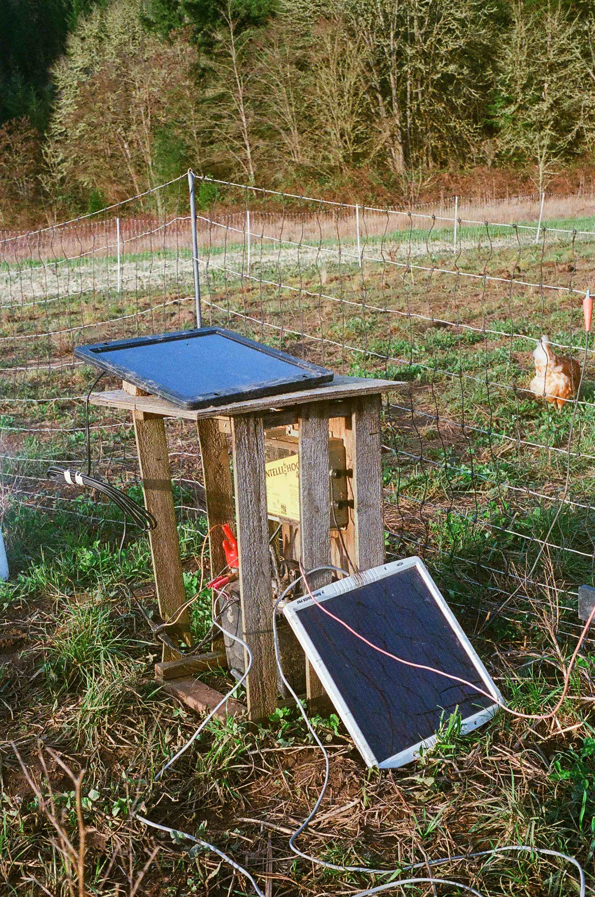 An electric fence used to keep chickens out of our crops is charged by a solar panel.