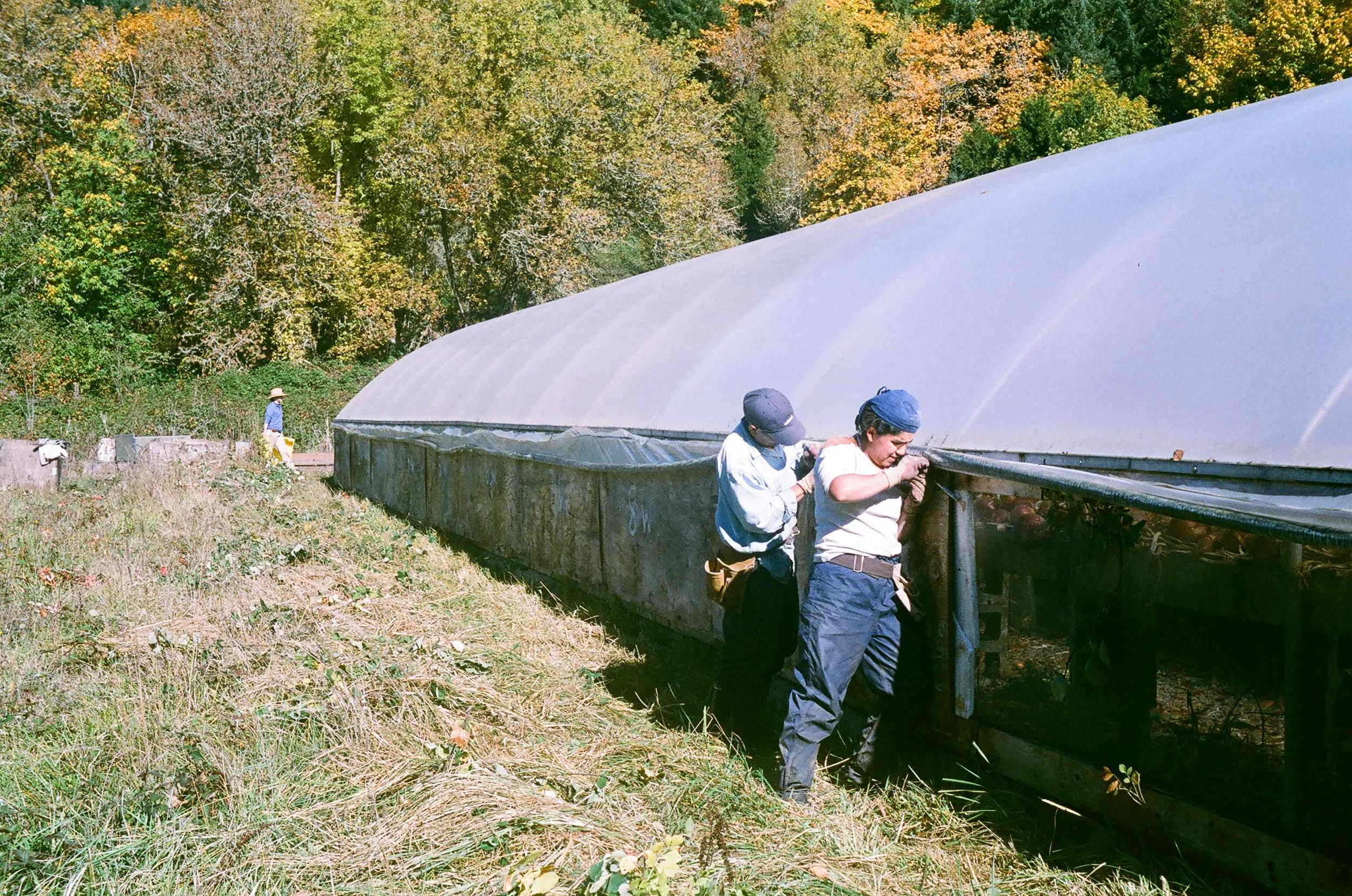 Our greenhouse is a major source of heat loss. We put up insulated walls every Fall. The walls are removed in the late spring to allow for better ventilation.