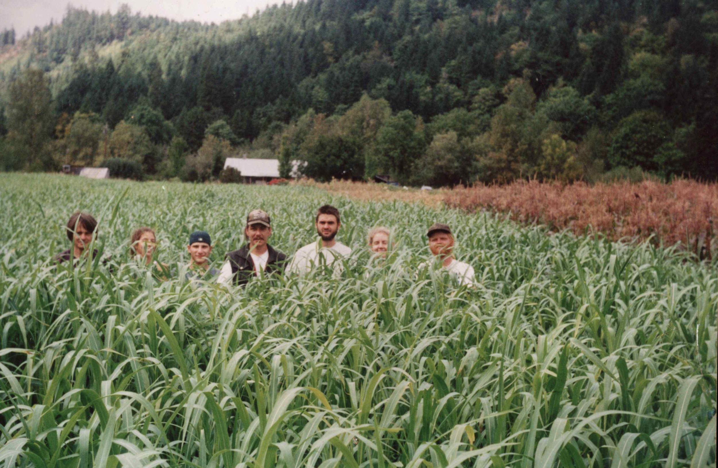Crew standing in the sudan grass cover crop