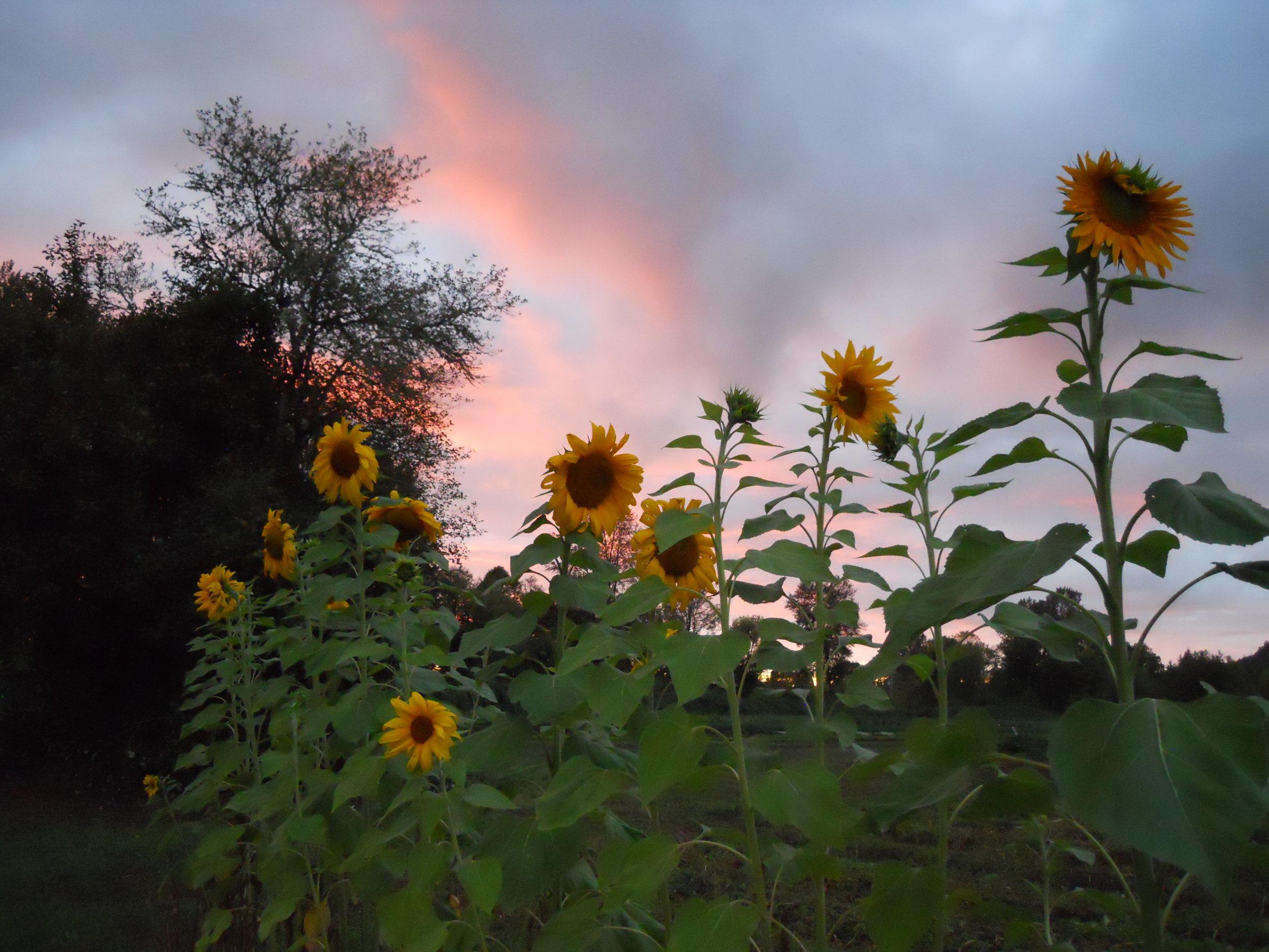 11 Sun Set.JPG