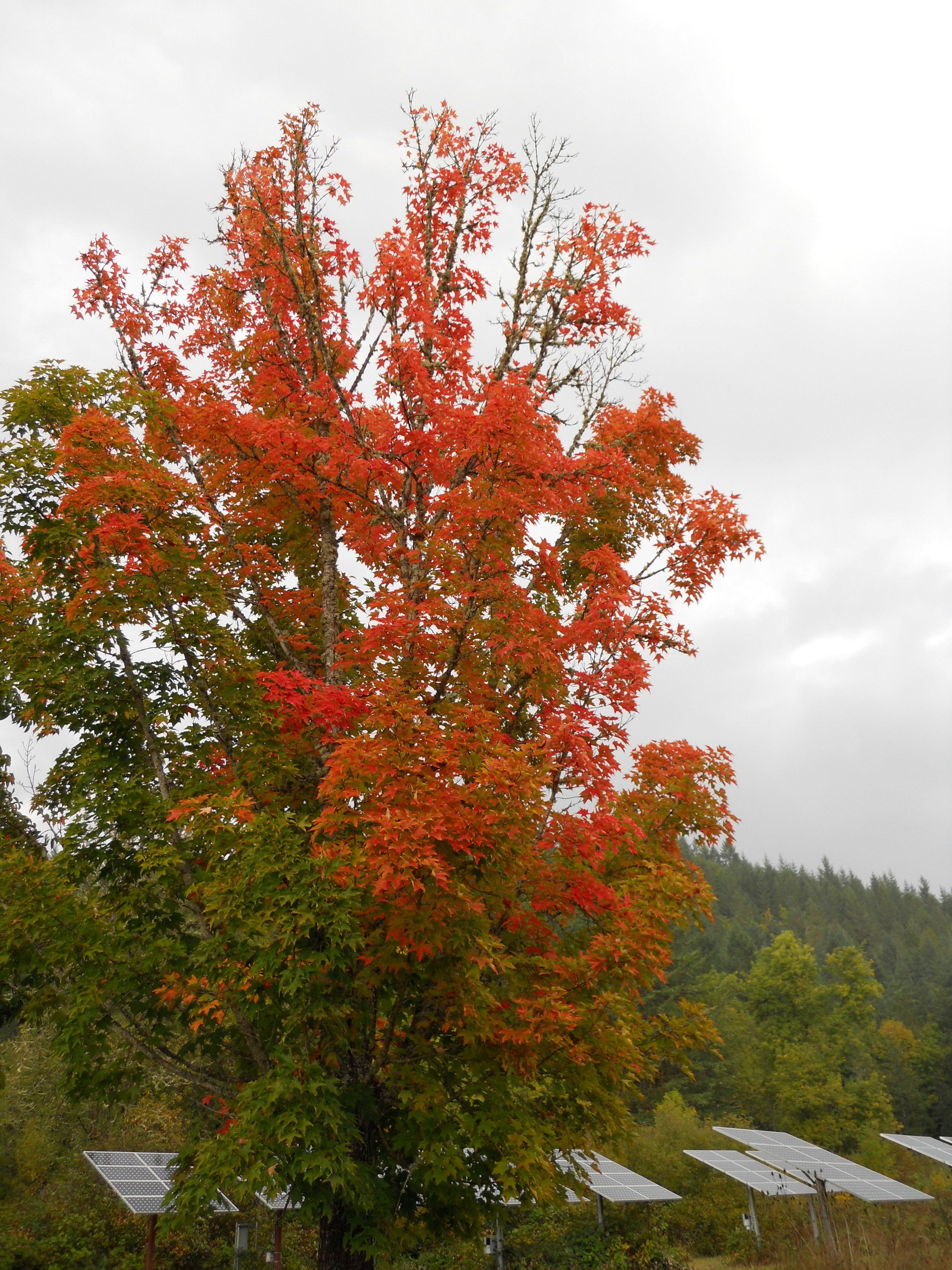 15 'tis Autumn.JPG