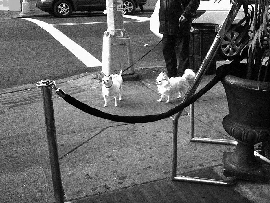 Pups_web.jpg