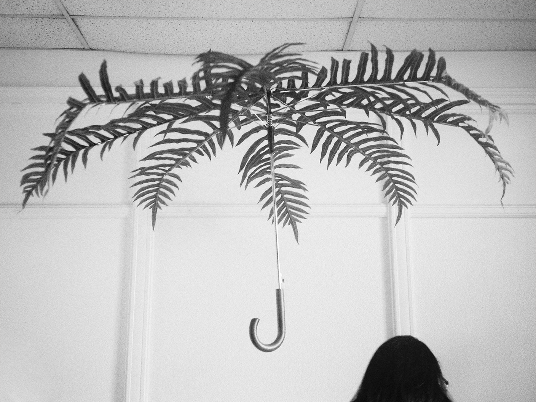 Palmbrella.jpg