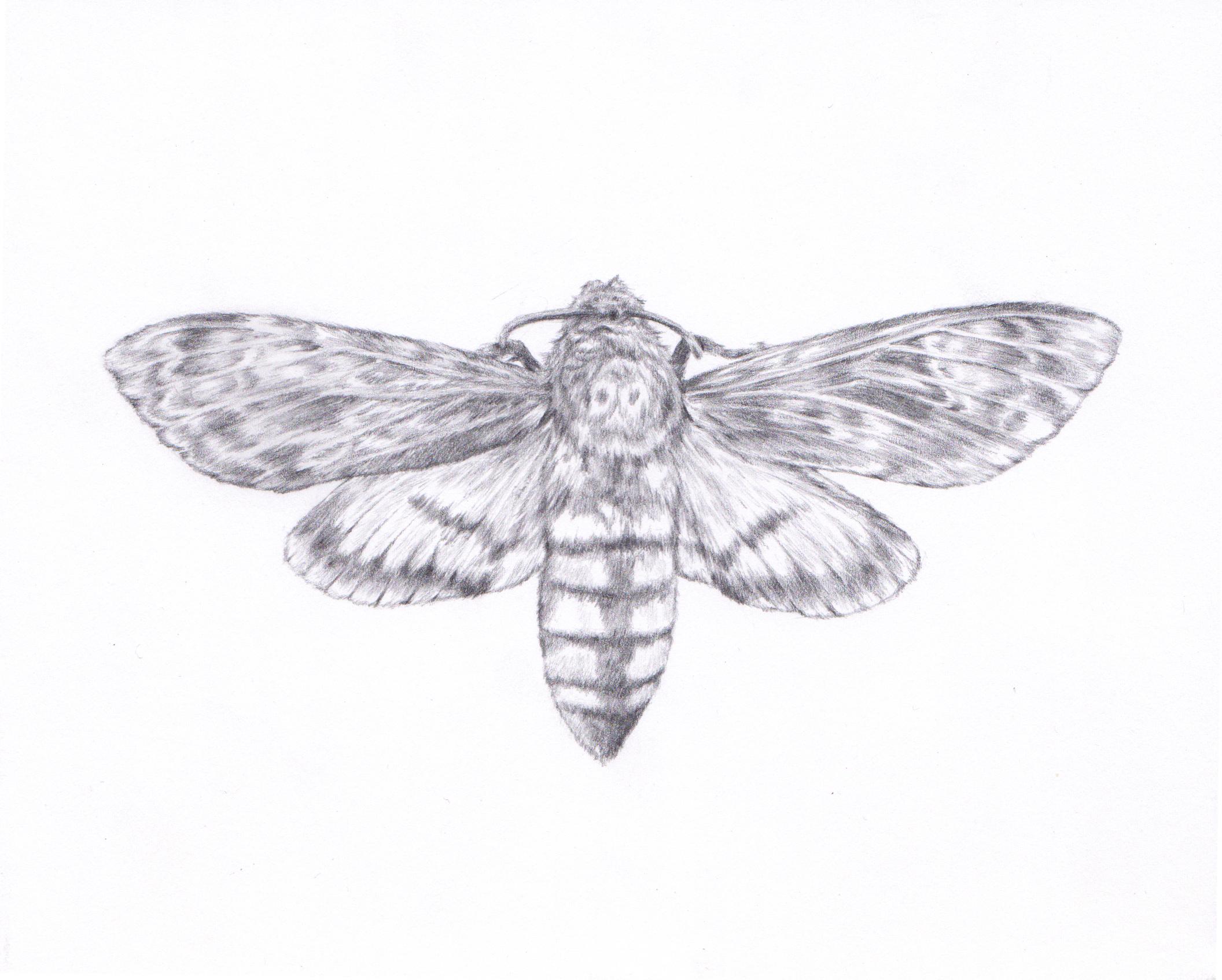 Web moth.jpg