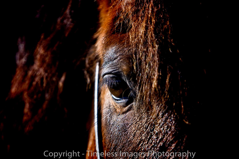 Horses eye portrait