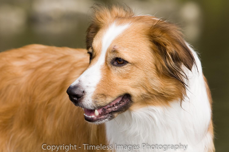 Pet Photography Portraits 01 (1).jpg