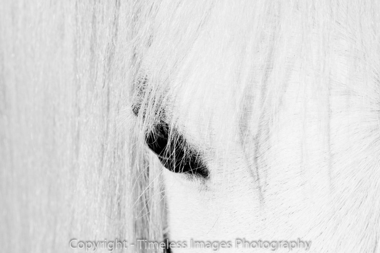 Pet Photography Portraits 01 (5).jpg