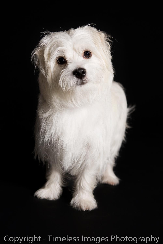 Pet Photography Portraits 01 (9).jpg