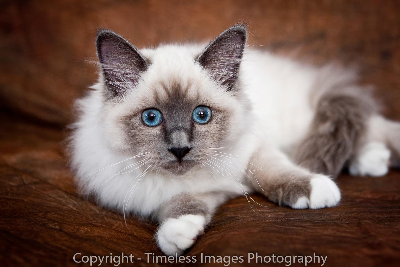 Pet Photography Portraits 01 (10).jpg