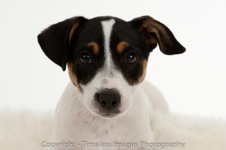 Pet Photography Portraits 01 (11).jpg