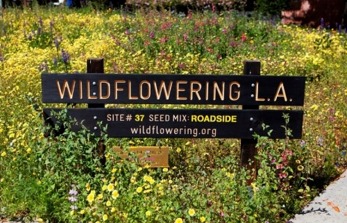 Wildflowering L.A. is a native wildflower seed sowing initiative throughout Los Angeles County by artist Fritz Haeg.