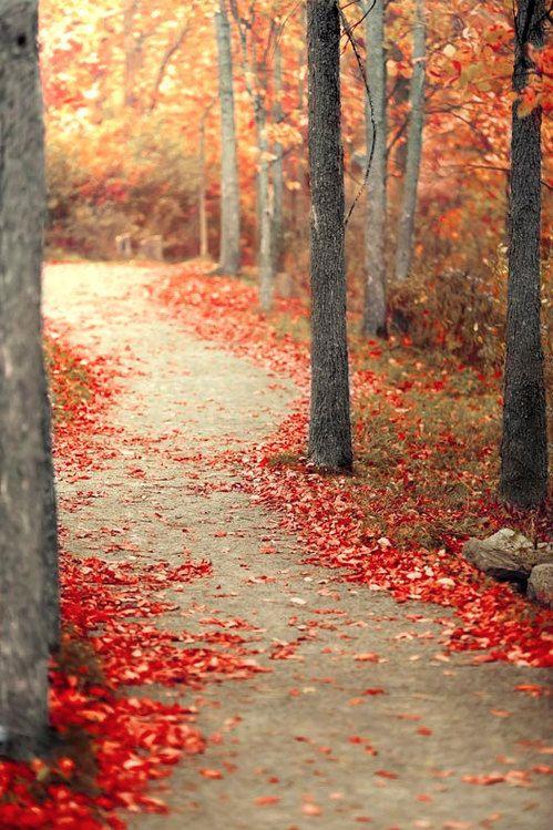 autumnmood.jpg