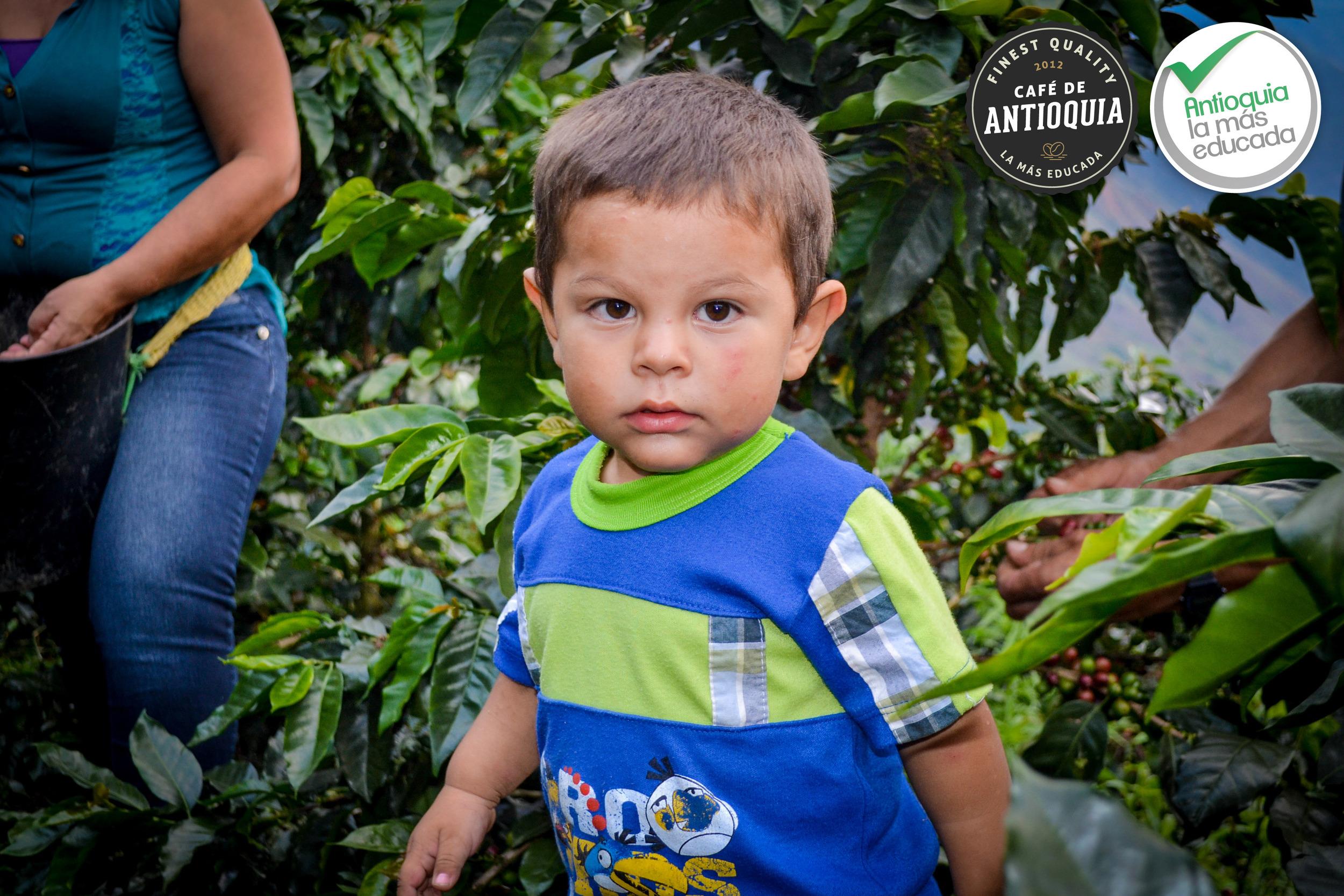 Antioquia Microlot Majagual 8.jpg