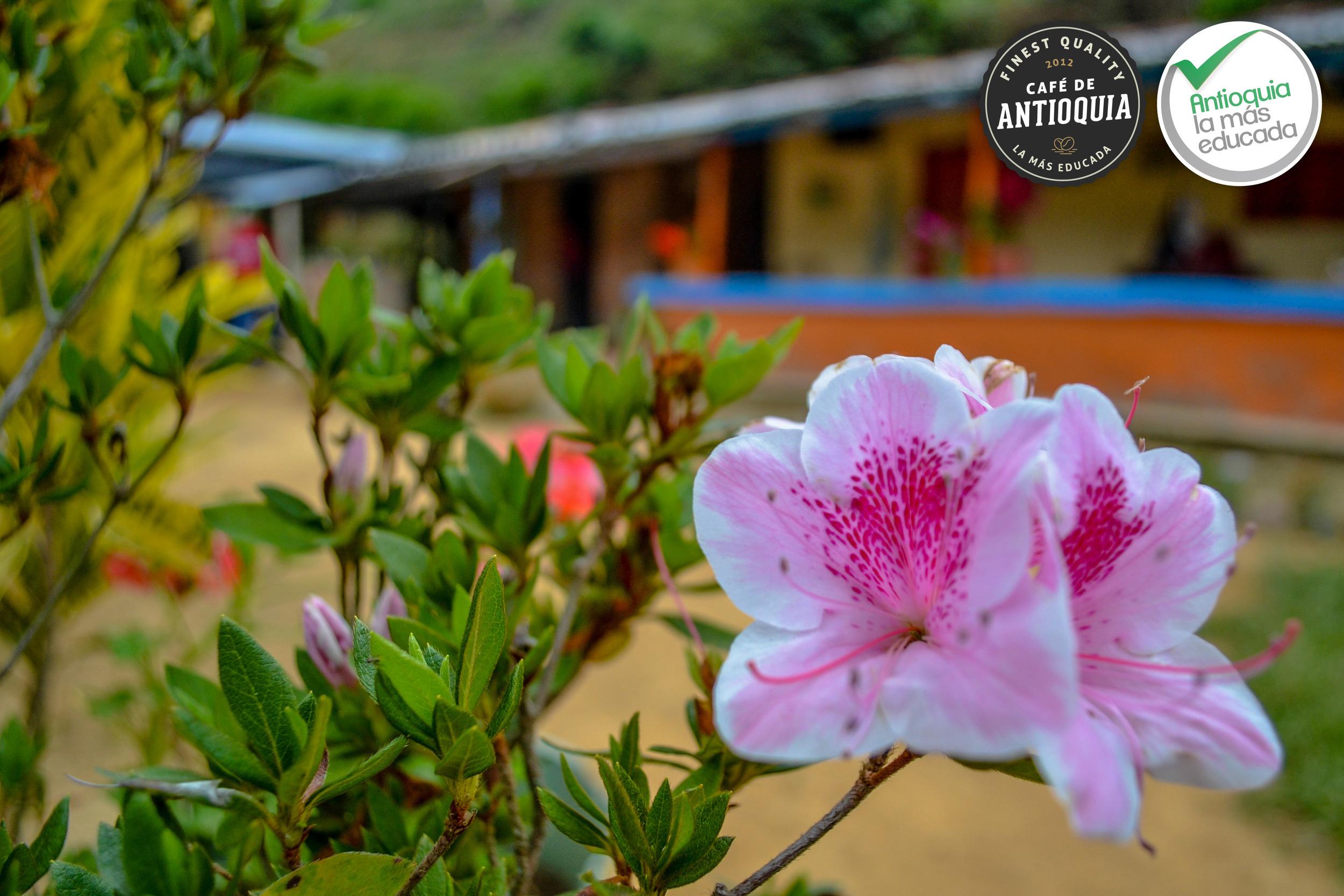 Antioquia Microlot Finca El Rodeo 3.jpg