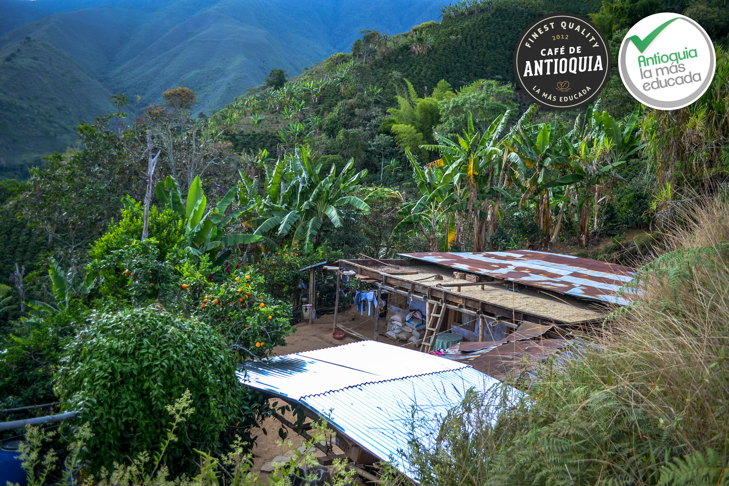 Antioquia Microlot Finca Los Cedros 5.jpg