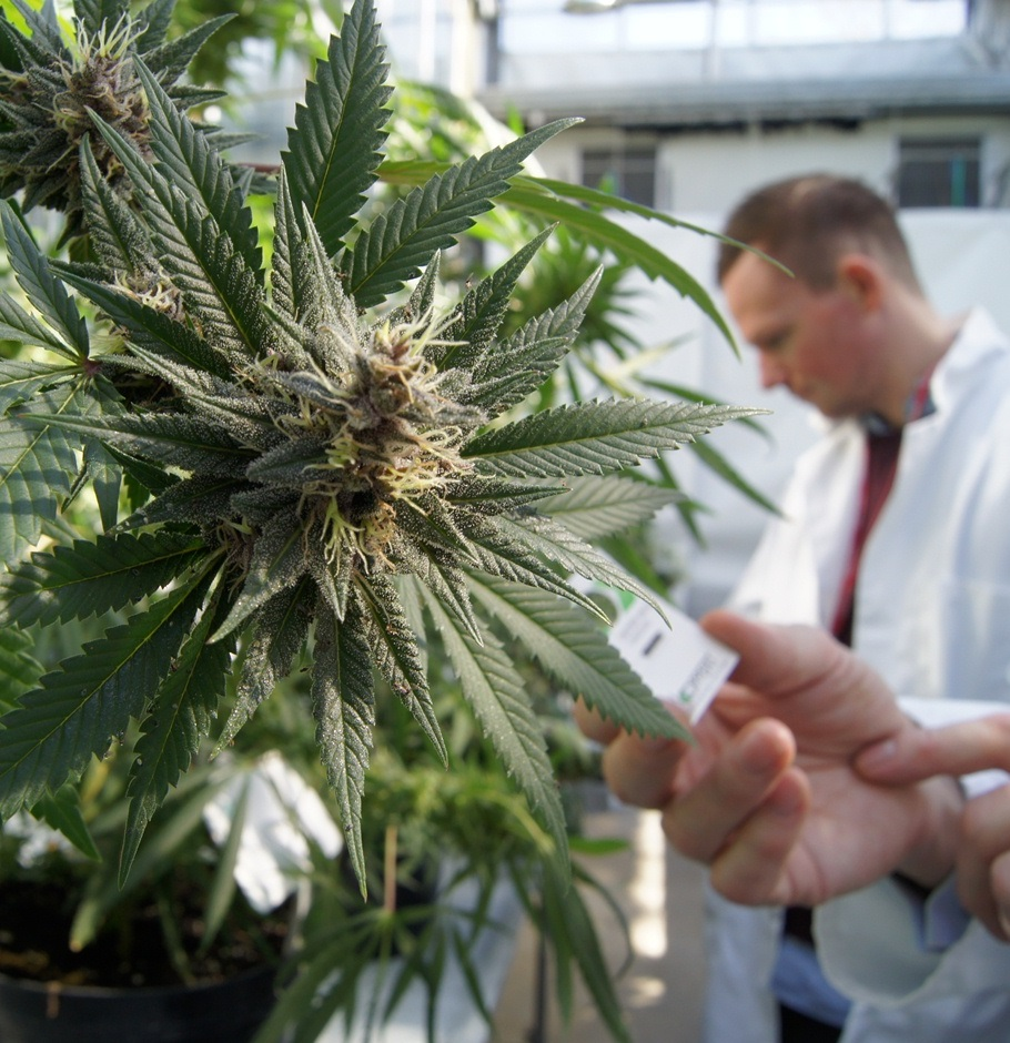Kashmir Cannabis Lab