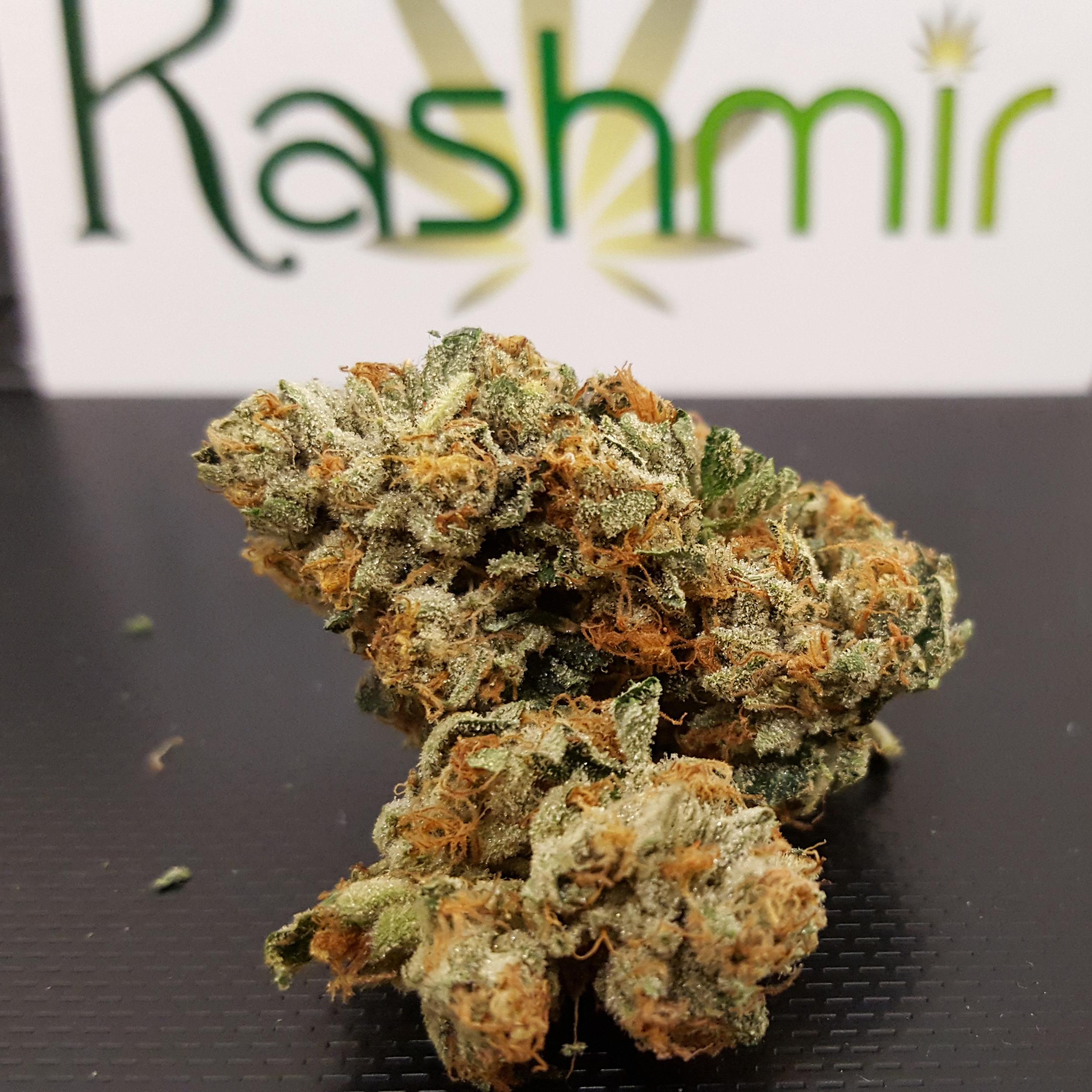 Kashmir Cannabis O G Kush
