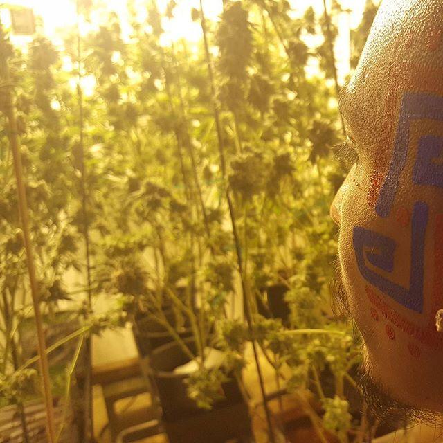 Tribal grower. Lol. #kashmircannabis #smoke_face_killah #kashmirlifestyle #concentrated_events