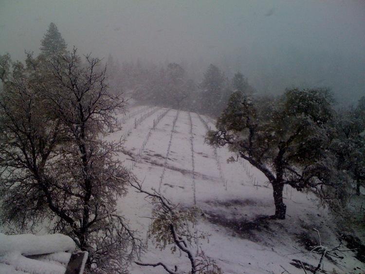 vineyard in snow.jpg