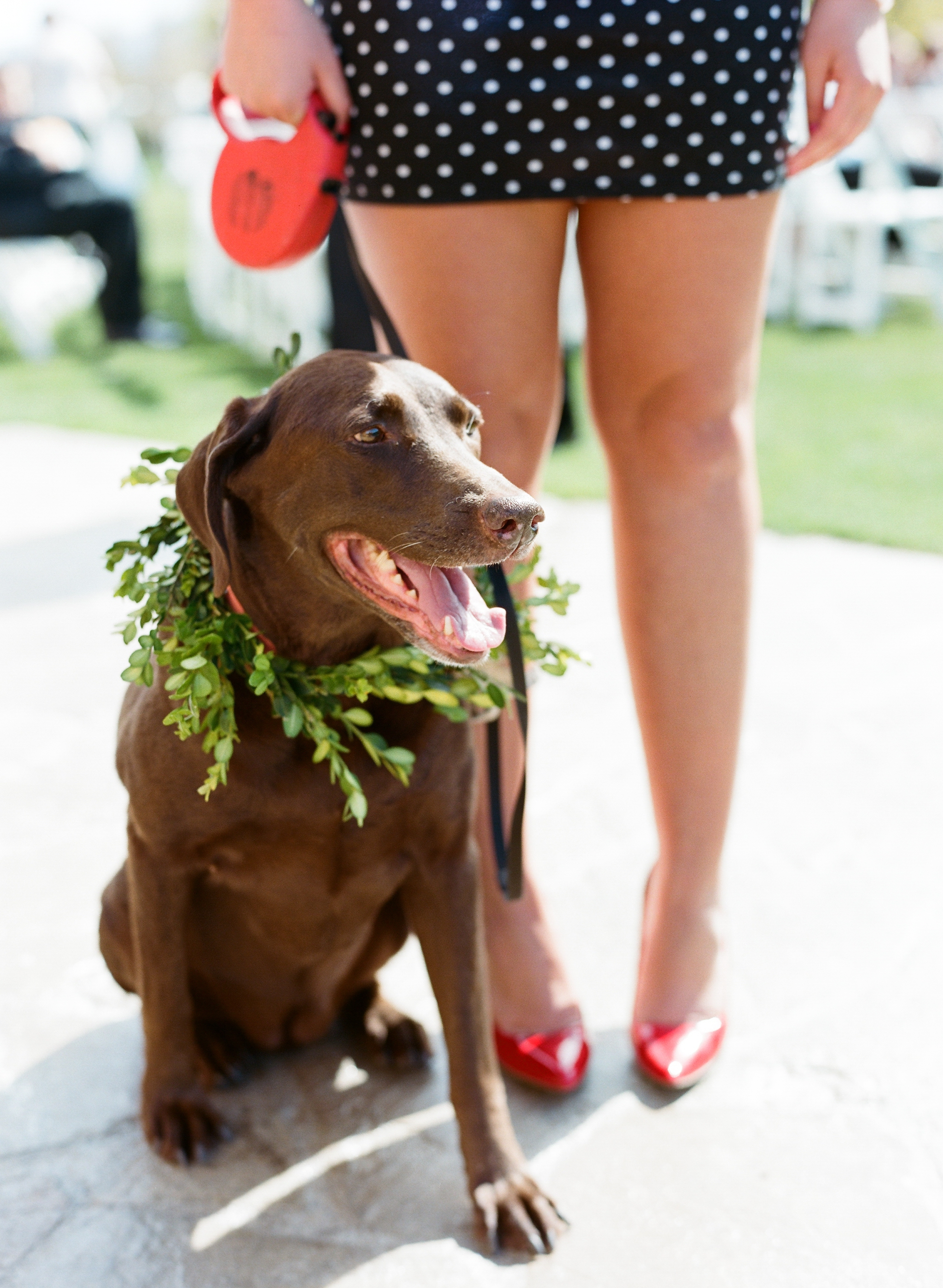dogs in weddings photos