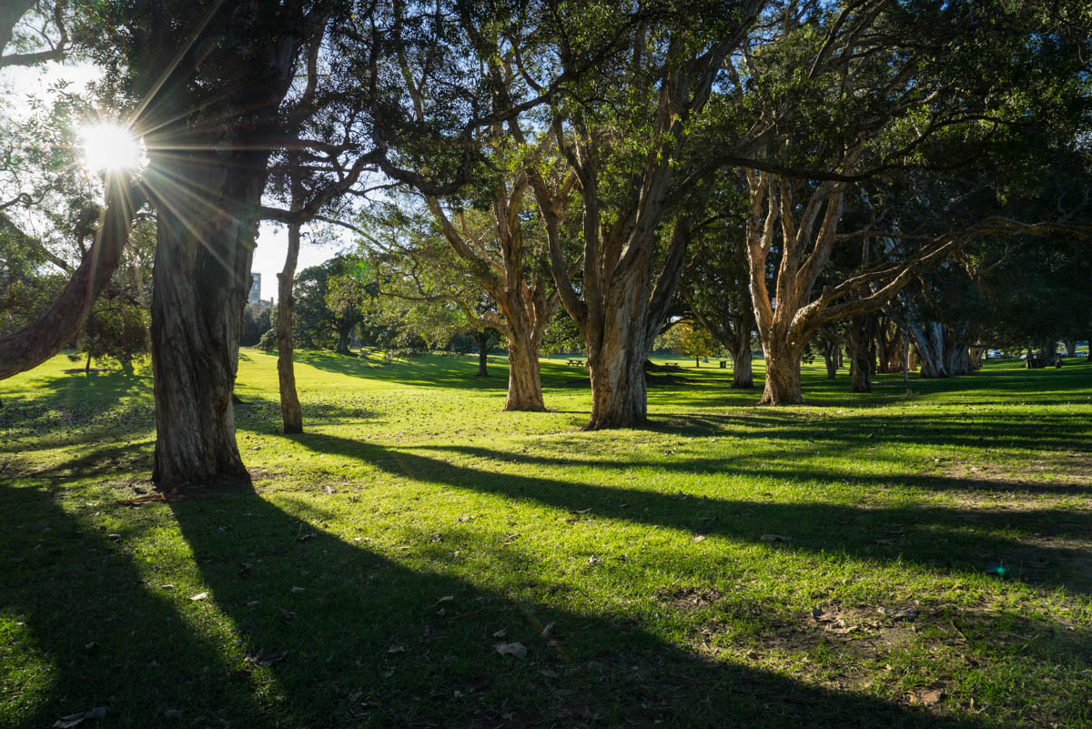 Afternoon light at Centurion Park    © C P SATYAJIT
