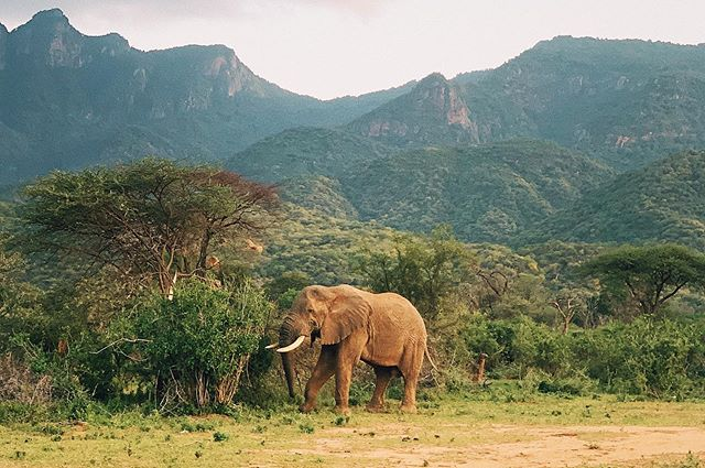 Elephant at Samburu