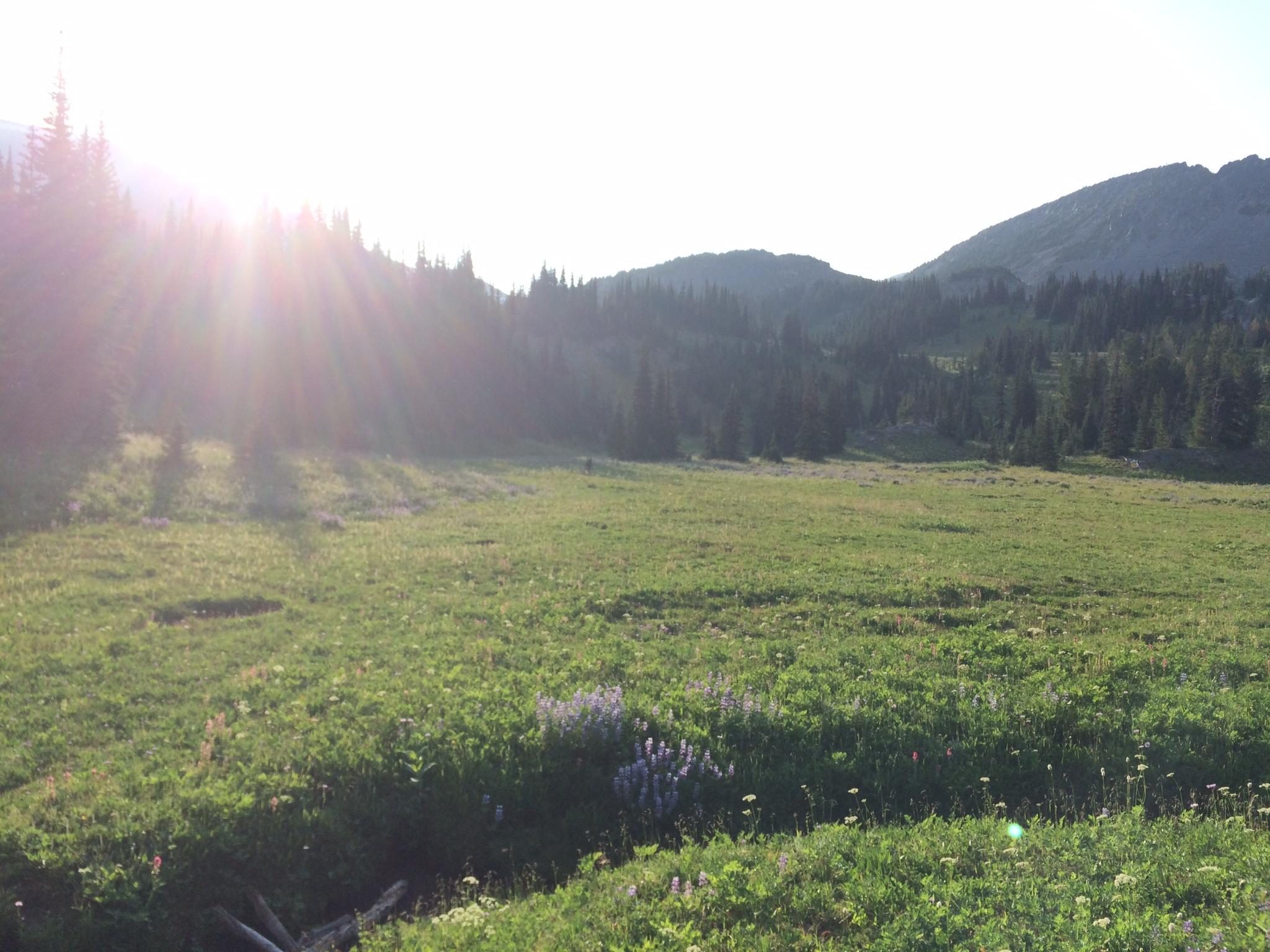 Alpine meadow between Sourdough Ridge and Frozen Lake