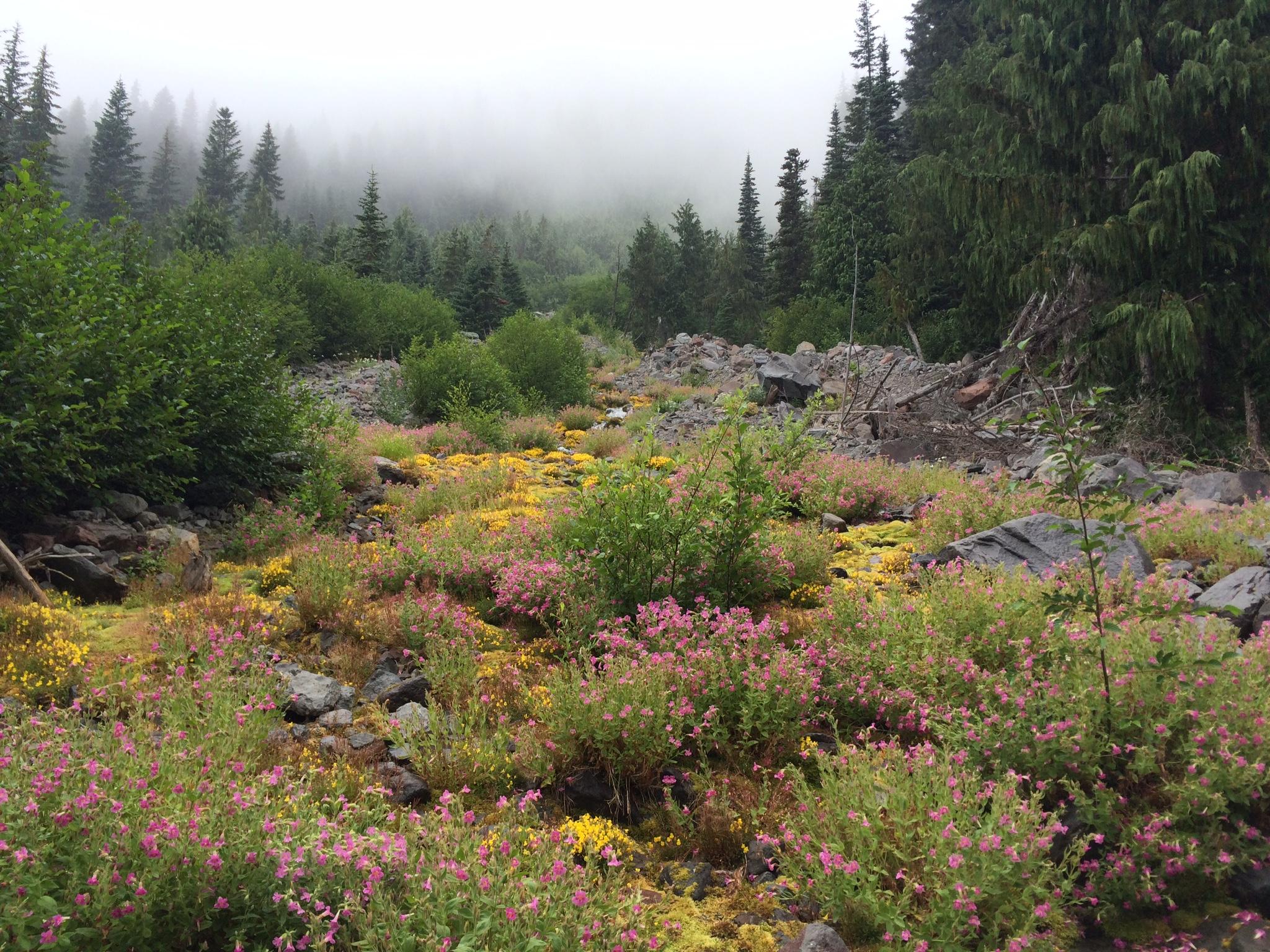 Alpine Meadow along the Glacier Basin trail